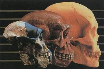 Teoria de la Evolucion y el Creacionismo