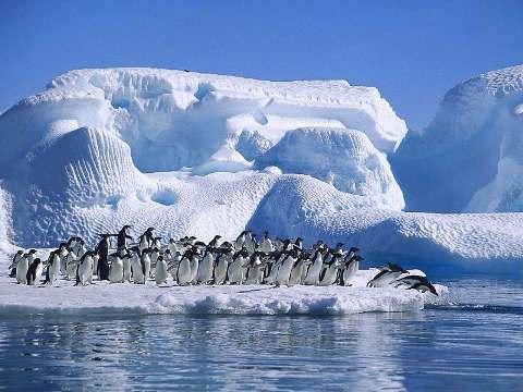 La Antártida estuvo cubierta por árboles