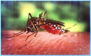 El Dengue: Prevencion y Sintomas